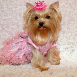 Беатрисс-принцесса2