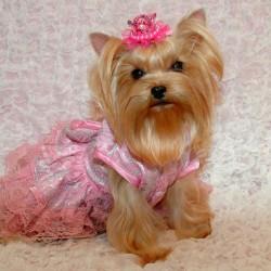 Беатрис-принцесса